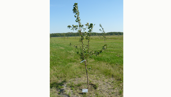 Historical/Parks - Memory Tree Stake for Fort Whyte Alive
